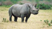 GTY black rhino lpl 131027 16x9 992