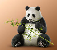 Panda T71