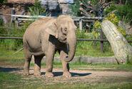 Photo-detail-asia-asian-elephants-8