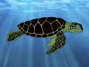 Rileys Adventures Green Sea Turtle
