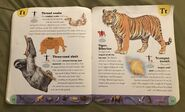 Extreme Animals Dictionary (23)