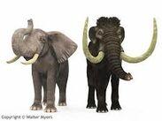 Mammoth Ears and Elephant Ears