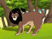 Rileys Adventures Asiatic Lion
