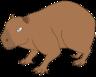 Sammy the Capybara