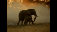WAET Elephants