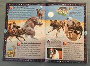 Wild Cats and Other Dangerous Predators (9)