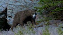 BBC.Prehistoric.Park.2of6.A.Mammoth.Undertaking.XviD.AC3.6ch.MVGForum.avi snapshot 08.10 -2016.09.02 19.01.34-