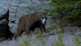 Cave Bear The Parody Wiki Fandom