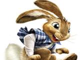 101 bunny street