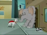 Elephant, African Bush (Krypto the Super Dog)