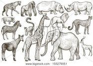 Elephant, Giraffe, Zebra, Okapi, Lion, Hippopotamus, Rhinoceros, Lion, Impala, Wildebeest, Hyrax, Penguin, Ostrich, Crane, Hornbill, Eagle, Augur, Crocodile, Meerkat, Leopard, Bonobo, Gorilla, Cheetah, and Chimpanzee