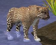 Leopard-wildlife-park-2