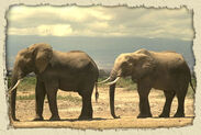 Rainforest Elephant