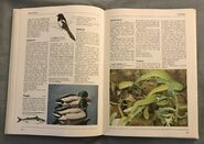 The Kingfisher Illustrated Encyclopedia of Animals (93)