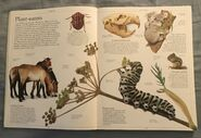 DK Encyclopedia Of Animals (7)