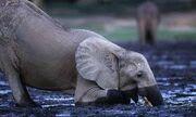 Giraffe Lion Elephant Deer Hippopotamus Bear Zebra
