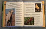 Scholastic Encyclopedia Of Animals (6)