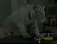 Animorphs Tiger