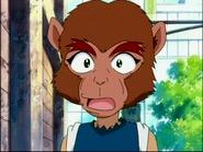 Daichi monkey boy