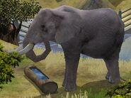 Elephant-wildlife-park-2