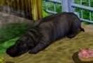 Hippopotamus-zoo-empire