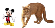 MM Mountain Lion