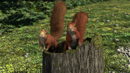 TTTE Squirrels