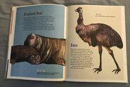 The Dictionary of Ordinary Extraordinary Animals (15)