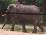List of Species in Toledo Zoo