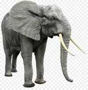 African Forest Elephant PNG