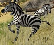 Burchells-zebra-wildlife-park-2