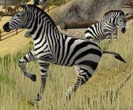 Burchells-zebra-wildlife-park-2