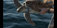 CITIRWN Sea Turtle