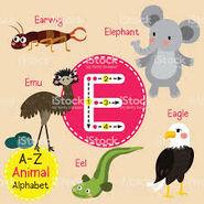 Emu Earwig Eagle Eel Elephant