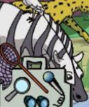 MSB Zebra