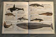 Macmillan Animal Encyclopedia for Children (39)