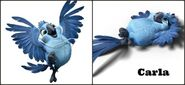 Rio 2 Carla-white-background