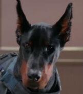 Security-guard-dog--1.7
