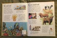 The Kingfisher First Animal Encyclopedia (18)