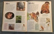 The Kingfisher First Animal Encyclopedia (45)