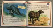 Animals of South America (7)