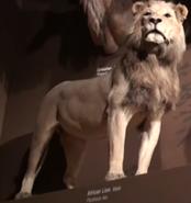CMONH Lion