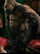 Dolittle Gorilla
