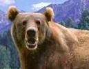 Kodiak brown bear switch zoo