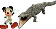 Mickey meets nile crocodile