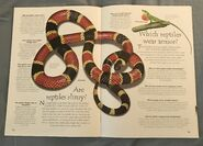 Reptiles (Over 100 Questions and Answers to Things You Want to Know) (5)