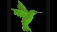 Safari Island Hummingbird