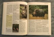 The Kingfisher Illustrated Encyclopedia of Animals (132)