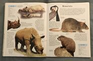 DK Encyclopedia Of Animals (141)