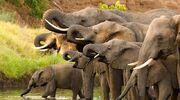 1652534-zimbabweelephantsreuters-1520334863-526-160x120
